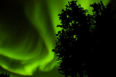 March Madness-117 (juan_guthrie) Tags: northernlights yellowknife nwt aurora
