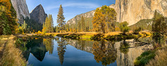 Merced River Panorama Reflection (Jeff Sullivan (www.JeffSullivanPhotography.com)) Tags: yosemite fall colors photography workshop october 2018 iphone xs mobile phone cellphone camera images iphoneography california usa apple photo copyright jeff sullivan iphonexs shotoniphone reflection landscape nature travel yosemitevalley yosemitenationalpark nationalpark national park mariposa county
