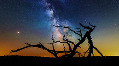 Piney under the Milky Way - Shenandoah National Park (Insite Image) Tags: snp bigmeadows findyourpark milkyway shenandoahnationalpark shenandoah nightphotography silhouette tree astrophotography astro stars nationalparkservice