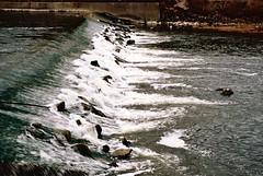 Arno_Florence (michele.palombi) Tags: florence river arno analogic 35mm tuscany