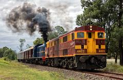 Smokescreen (SJB Rail) Tags: 4403 4001 nswgr trains railways new south wales railroads alco