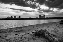 Urban Driftwood (B&W variant) (John fae Fife) Tags: beach scotland aberdeen rivermouth sea sky towerblocks sand driftwood river clouds