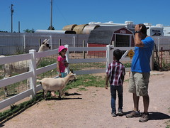 P7021855 (photos-by-sherm) Tags: old macdonalds farm rapid city south dakota sd animals machinery museum petting zoo goats horses turkeys chickens summer