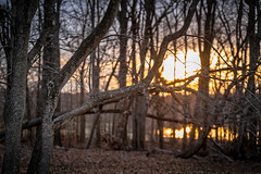 Sun Zinging Through the Trees (John Brighenti) Tags: outdoors outside nature rachelcarson conservation park montgomery county evening woods forest rural alone solitude quiet peace sony alpha a7rii ilce7rm2 tamron 2875 nex femount emount ilce bealpha sonyshooter lens wide zoom trees sunset sun setting sundown dusk light orange red yellow sky blue bokeh blur depthoffield spring