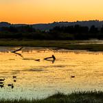 Wetland sunrise thumbnail
