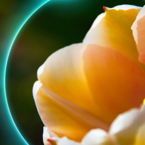Toronto Ontario - Canada - Allan Gardens Conservatory - Toronto Tropical Garden -  Yellow Tulip  Macro