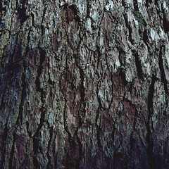 Tree bark (lebre.jaime) Tags: portugal beira covilhã jardimbotânicodemontanha 503cx distagon cf4050fle film analogic 120 film120 mf mediumformat tree bark abstract kodak portra160 portra160120 epson v600 affinity affinityphoto