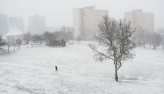 019Jan 03: New Year Blizzard (Johan Pipet 2M+ views) Tags: flickr sneh fujavica blizzard snow tree strom bratislava dubravka suburb outskirt pod zahradami koprivnica city town park weather season winter zima eu europe palo bartos bartoš canon g7x landscape