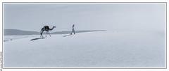 Lost? (Adrar, Mauritanie) (L'Abominable Homme de Rires) Tags: dunes adrar mauritania mauritanie afrique sahara sable dune noiretblanc nb blackwhite bw landscape canon5d 5dmkiii sigma 24105mmf4 dxo photolab lightroom terdav trekking trek randonnée paysage meharée
