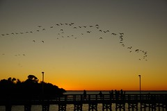 Don't forget to look up! (ironicdream) Tags: sunset pier anclote gulf