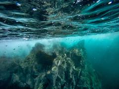 (evemari.luz) Tags: divingphotography oceanopacifico photosub scubadiving oceaneyes nobluenogreen
