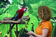Green Winged Macaw [4] (Ian R. Simpson) Tags: greenwingedmacaw macaw parrot bird loroparque zoo tenerife canaryislands spain puertodelacruz lady trainer handler