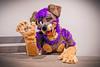 Kory says hai! (Kory / Leo Nardo) Tags: kory pupleo furry fur fursuit suiting fursona dobie doberman puppy mixedcandy dog animal 2019