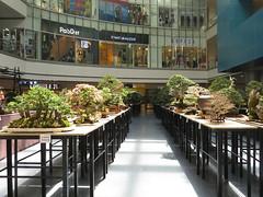 bonsai exhibit (DOLCEVITALUX) Tags: bonsai mall canonpowershotsx50hs
