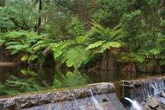 Reflections in the Weir (Jan Diamond) Tags: donnelleysweir healesville reflections treeferns
