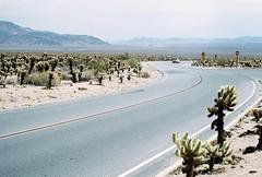 (nikki.lake) Tags: desert cactus analogue analog portra kodakportra400 kodakportra canonae1 joshuatree california 35mm