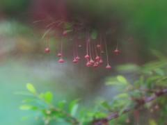 86/365 - Rainy Wednesday (Fiona Dawkins) Tags: 365the2019edition 3652019 day86365 27mar19