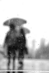 Umbrella (jaume zamorano) Tags: blackandwhite blancoynegro blackwhite blackandwhitephotography blackandwhitephoto bw d5500 gente lleida lluvia monochrome monocromo nikon noiretblanc nikonistas pov people rain escala raining street streetphotography streetphoto streetphotoblackandwhite streetphotograph urban urbana