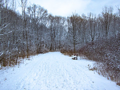 (A Great Capture) Tags: agreatcapture agc wwwagreatcapturecom adjm ash2276 ashleylduffus ald mobilejay jamesmitchell toronto on ontario canada canadian photographer northamerica torontoexplore winter l'hiver 2016 cold snow weather landscape paisaje paysage landschaft digital canon powershot d20 natur nature naturaleza natura naturephotography naturethroughthelens overcast cloudy outdoor outdoors outside woods trees tree arbre forest wald árvore neige schnee park parc trail path route walkway clouds