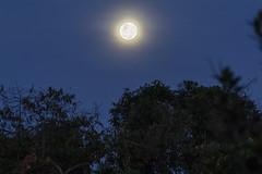 Salida de la luna (José M. Arboleda) Tags: atardecer salidadelaluna luna cielo árbol bosque paisaje popayán colombia canon eos 5d markiv tamron sp150600mmf563divcusda011 josémarboledac