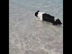 I love going to the beach and swimming in the ocean - Cute Dog (tipiboogor1984) Tags: awwstations aww cute cats dogs funny