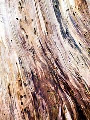Tree Closeup (Sebastian Schmidt) Tags: sebastianschmidt tree texture cracks lines holes outdoor outside nature closeup macro