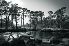 Stepping Stones (pm69photography.uk) Tags: dartmoor devon dartmoornationalpark southwest steps steppingstones bw blackandwhite monochrome trees tree river sonya7r3 sonya7riii ilovedevon ilce7rm3 ilovedartmoor moody atmospheric atmosphere