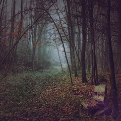 Fade into Darkness (M a r i k o) Tags: iphone iphonex iphoneography iphonephotography mobile mobilephotography mariko square forest woods trees wald branches leaves autumn fog mist nebel bench decayed decay erding aufhausen bayern bavaria germany hipstamatic snapseed mextures