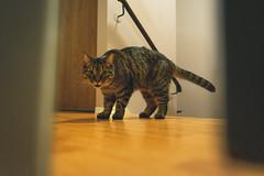who dat? (iocatco) Tags: cat kitten cats sony a7