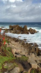 IMG_3190 (mudsharkalex) Tags: california pacificgrove pacificgroveca