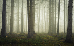 Light, Forest, Fog . . . (Netsrak) Tags: baum bäume eu eifel europa europe forst landschaft natur nebel rheinland rhineland wald fog forest mist nature trees winter woods