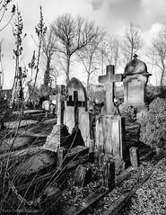 Forever (Tobias Dander) Tags: tobiasdander holland zuidholland leiden cemetery zijlpoort begraafplaats grave cross shadow galaxys7 bnw zwartwit blackandwhite mood winter monochrome