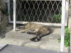 IMG_6480 (Damien Marcellin Tournay) Tags: amphitheatrumromanum antiquité bouchesdurhône arles france amphithéâtre gladiateur gladiators gatto pfoum chat cat