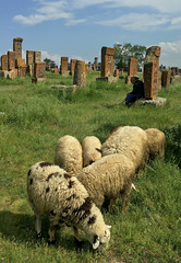 Old Shepard and Her Flock (cowyeow) Tags: lakesevan armenia caucuses sevan travel composition culture design old cemetery carving cross crosses faith christianity orthodoxchristianity noratus noratuscemetery tombstone beautiful khachkars sheep flock herd lady woman oldlady oldwoman animals shepard grass green