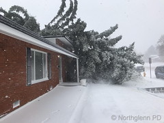 March 13, 2019 - A tree topped on a house in Northglenn. (Northglenn PD)