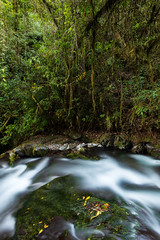Life (Chris Jimenez - Take Me To The Wild) Tags: wildlife cloudforest paisaje landscape river highlands costarica water chrisjimenez takemetothewild chris sangerardodedota jimenez nature cold