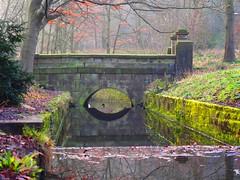 Swan swimming under woodland bridge (oneofmanybills) Tags: bridge gledhow leeds park reflection olympus pop art filter woodland stream