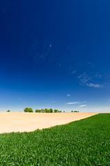 20180505-Canon EOS 6D-8333 (Bartek Rozanski) Tags: perwez namur belgium ardennes belgie belgique ardennen spring field agriculture sky tree