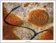 S (David Harris ARPS) Tags: rust corrugatediron littlemilford closeup photostyles focusstack pembrokeshire xtransformer