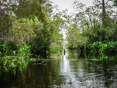 Kayaking to Pompion Hill Chapel on Huger Creek, Cooper River, and Quinby Creek (RandomConnections) Tags: berkelycounty copyright2019thomasetaylor kayaking lcu lowcountryunfiltered paddling cordesville southcarolina unitedstates newhope us