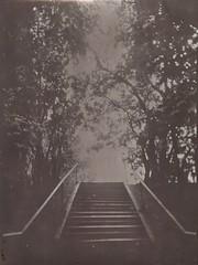 (NooFZz) Tags: bw blackandwhite largeformat reversal photopaper landscape bulldog4x5 periscope monochrome reversalprocess stairs path