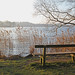 Bench by the forest lake in winter sunshine