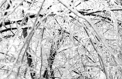 (Vlad Bobe) Tags: canoneos1v canon film 35mm kodak xtol frozen ice winter branch flower