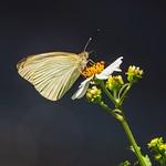 Butterfly and Big Bokeh Circles thumbnail