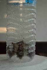bat in a bottle (the foreign photographer - ฝรั่งถ่) Tags: bat water bottle our house bangkhen bangkok thailand nikon d3200