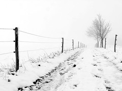 Auf dem Heimweg (flori schilcher) Tags: schilcher weg schnee winter baum zaun