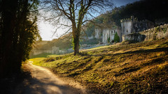 Golden morning (Einir Wyn Leigh) Tags: landscape castle wales light outside colorful uk nikon trees building derelict february 2019 nature natural sunlight road track foliage