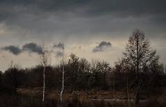 Waiting for the rain. (ALEKSANDR RYBAK) Tags: изображения пейзаж весна сезон погода природа дождь деревья небо облака
