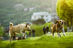Joyful moments (Pan.Ioan) Tags: dog canine domestic animal outdoors nature running plant playing mammal day