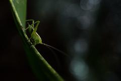 macro world (nathan.chaulet) Tags: macro macrophotographie d500 macrolife wildlife wildlifephotography wild nature nikon insect green nightshot